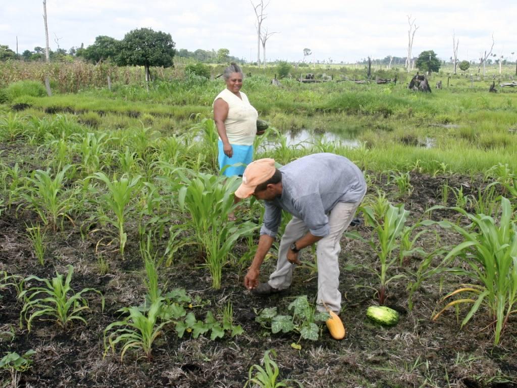 Treball al camp de l'Araguaia