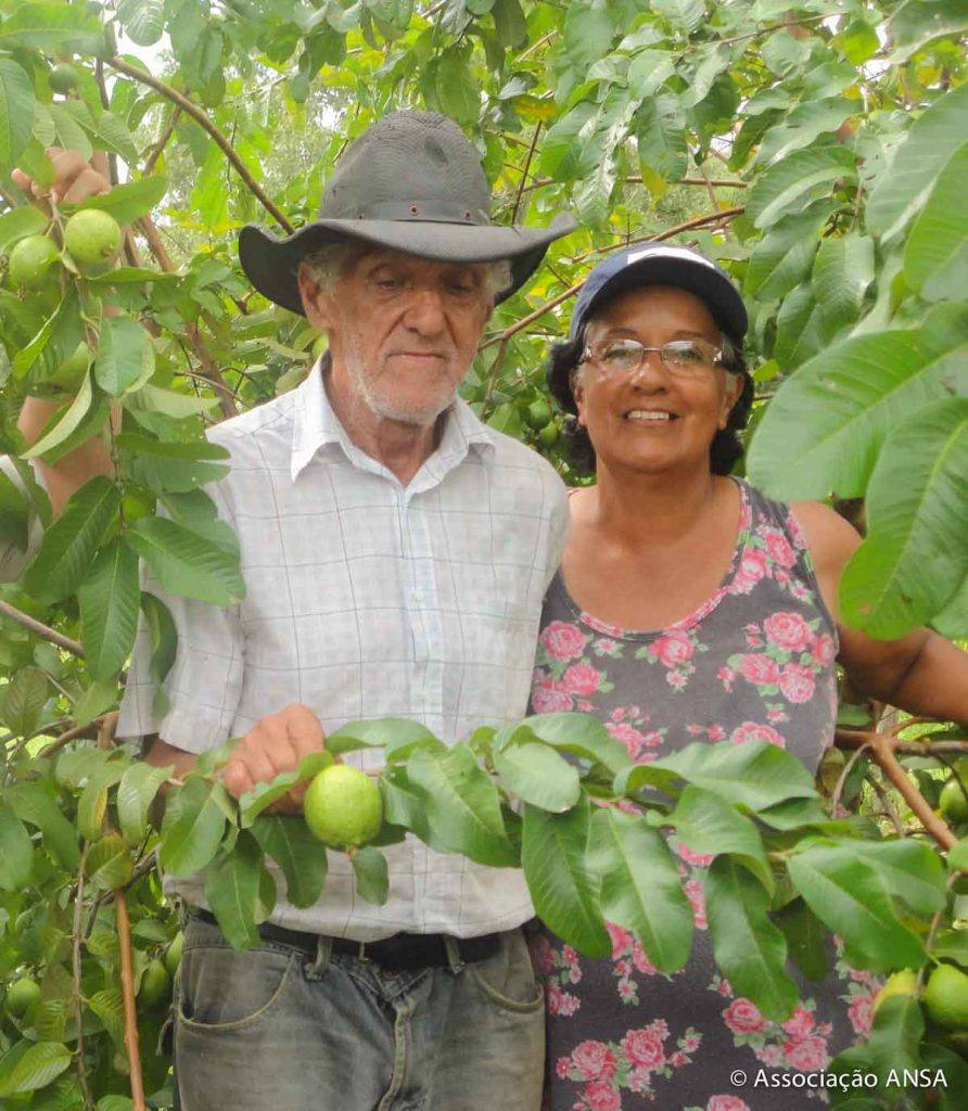 Famílias coletam e plantam frutas no Araguaia