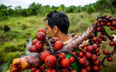 Com vivim, plantem i cuidem l'Amazònia
