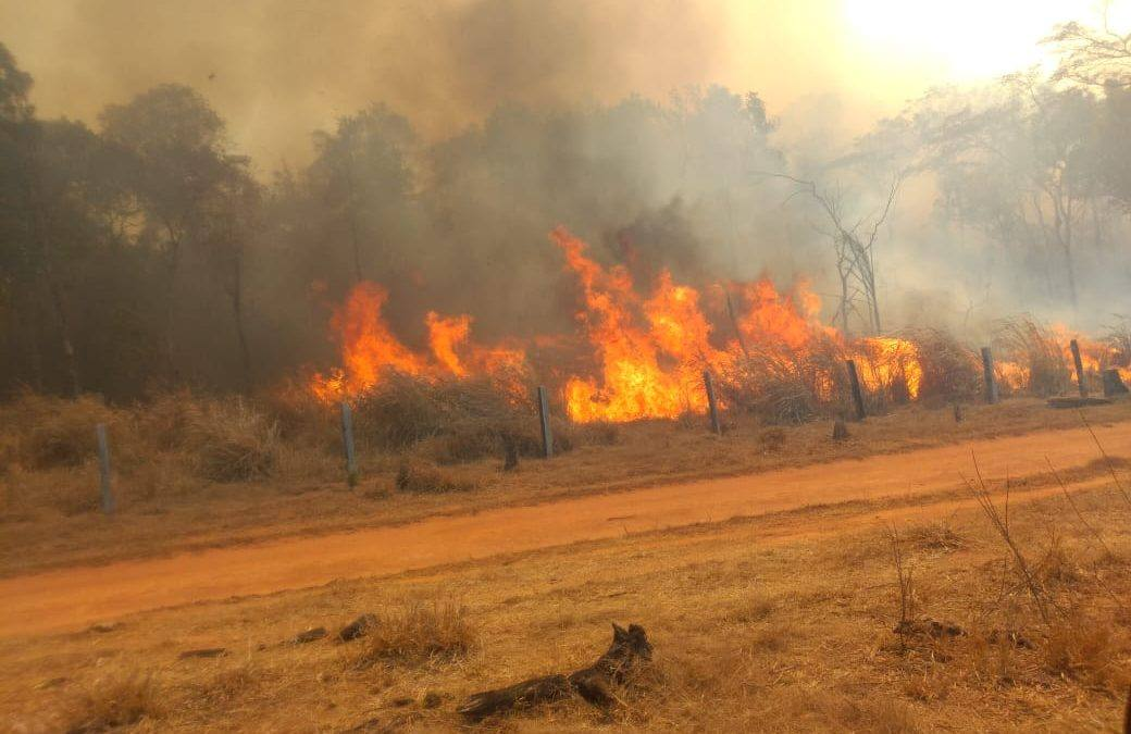 4 raons que expliquen la destrucció de l'Amazònia