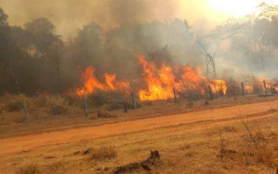 Les 4 raons que expliquen els incendis a l'Amazònia