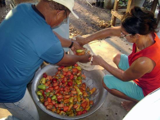 Frutas de vida: a iniciativa de luta contra a pobreza e dá certo