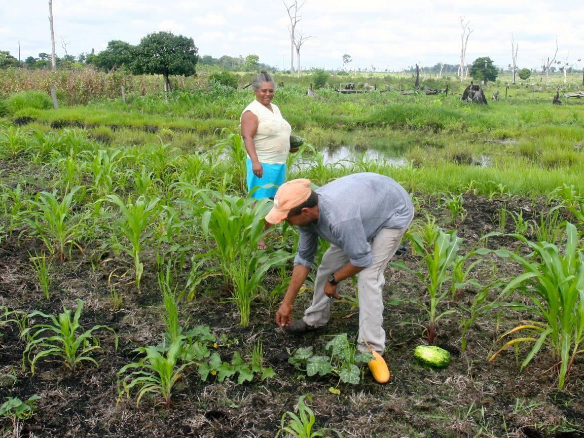 La agricultura familiar es una amenaza para el modelo agroindustrial